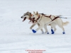 Lead dogs of Chandler Wappett on the trail nearing the finish line in Willow during the 2017 Junior Iditarod on Sunday  February 26, 2017.    Photo by Jeff Schultz/SchultzPhoto.com  (C) 2017  ALL RIGHTS RESVERVED
